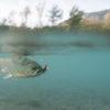 truite haut alpine à la mouche en Durance espinasses